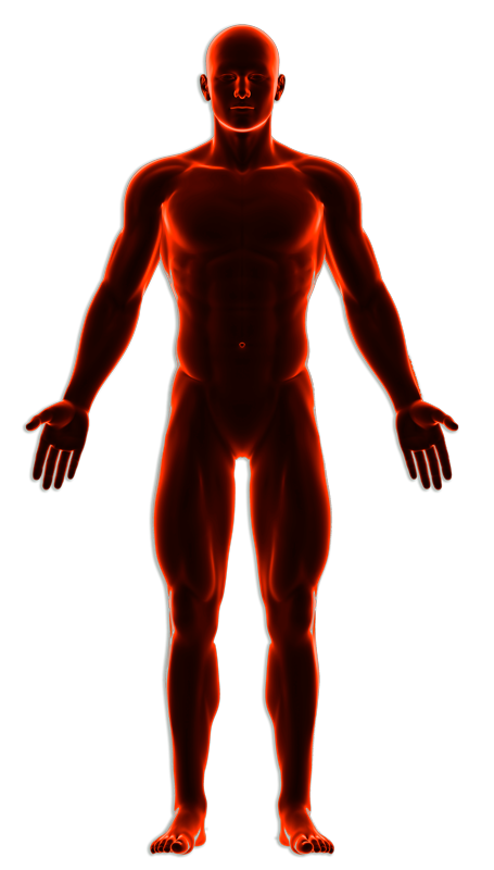 Anatomia - Hombre - Lesiones